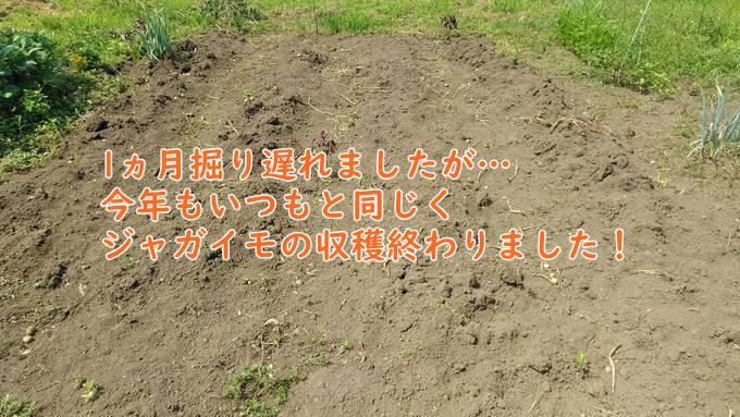 じゃがいも掘った後の畑