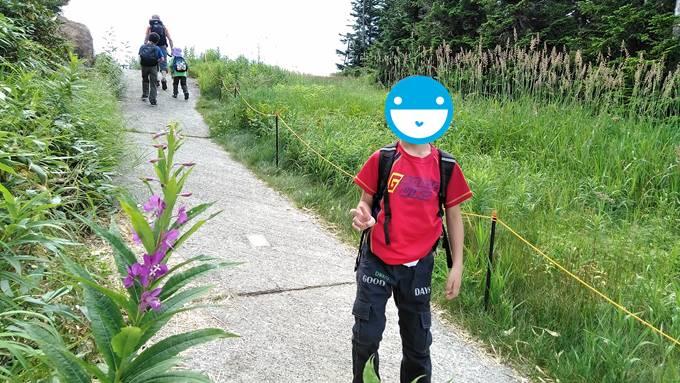 横手山のヤナギラン