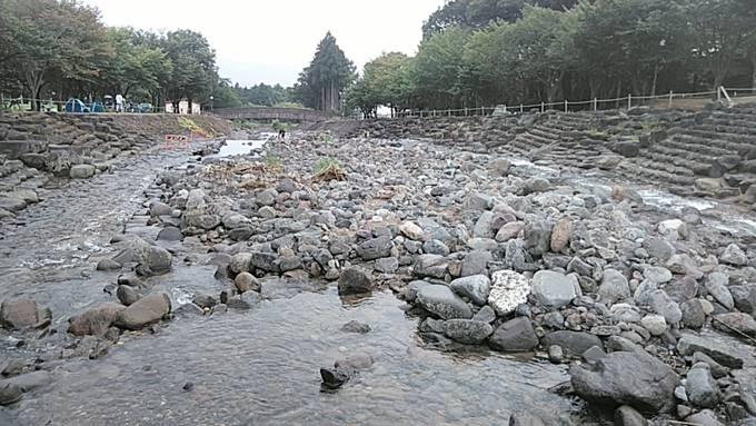 近所の公園の川