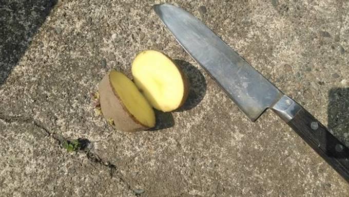 じゃがいも種芋の切り方