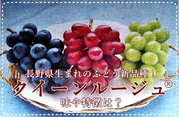 長野のぶどう新品種【クイーンルージュ®】味や特徴は?旬の時期は?