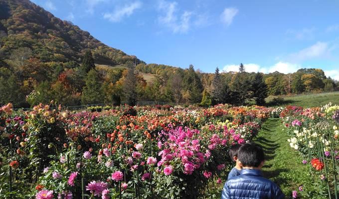 ダリアと高社山