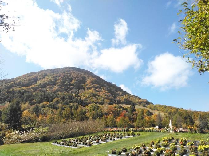 ダリアと高社山の紅葉
